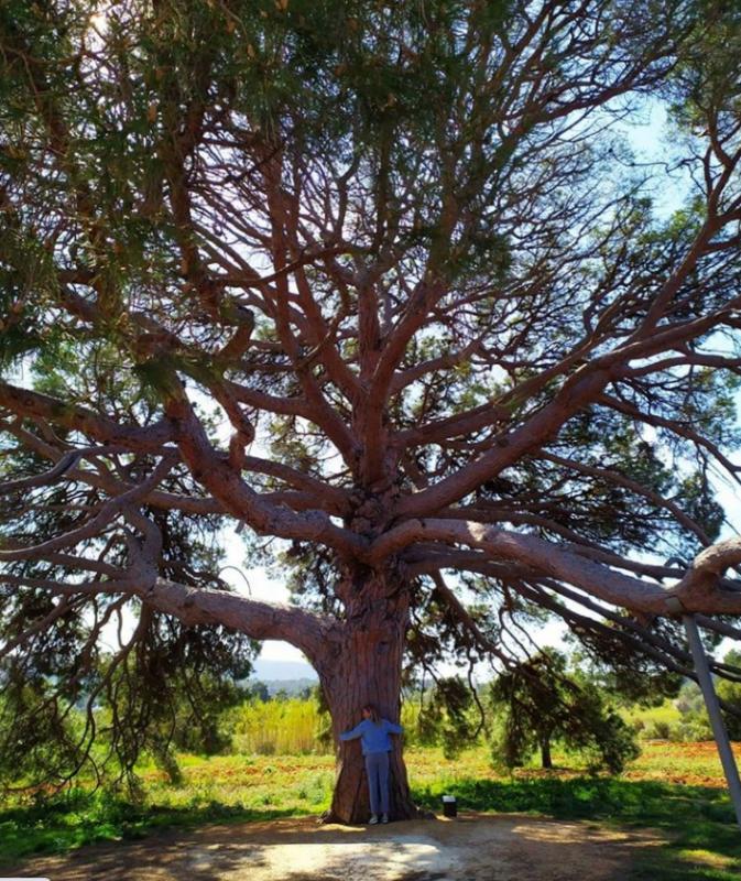 levenslessen boom